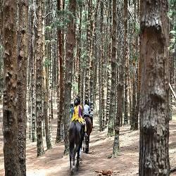Excursión a caballo Pirineo